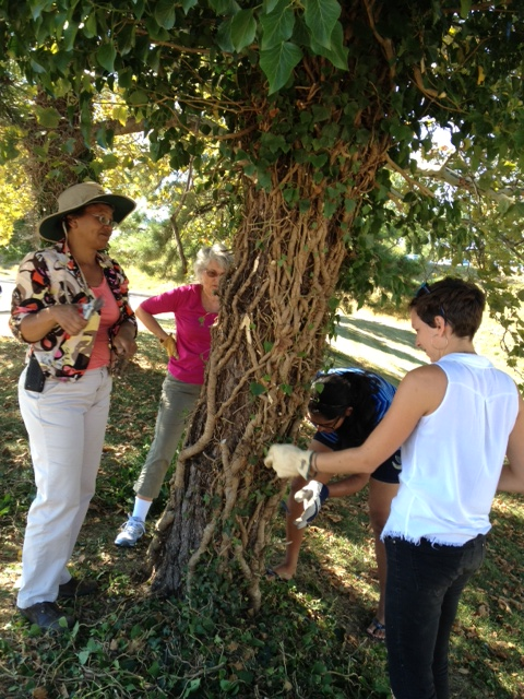 Dana, Donna, and Patricia LaNoue survey their work.  The tree looks much healthier.
